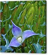 Bromeliad Pond Canvas Print