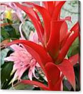 Bromeliad Red Pink Brick Canvas Print