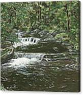 Brook In Spruceton Canvas Print
