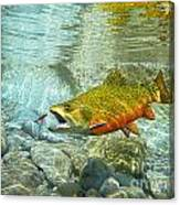Brook Trout And Artificial Fly Canvas Print