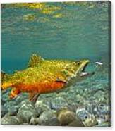 Brook Trout And Coachman Wet Fly Canvas Print