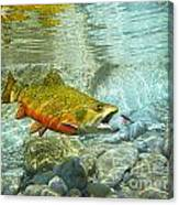 Brook Trout And Silver Doctor Canvas Print