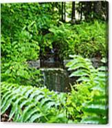 Brook Waterfall Canvas Print