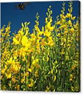 Broom And Carpenter Bee Canvas Print