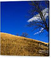 Broomsedge On Hill Canvas Print