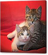 Brothers Kittens Canvas Print