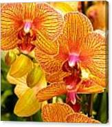 Smiling Brown And Pink Orchids Canvas Print