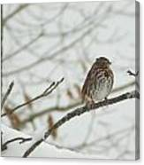Brown And White Speckled Bird On Snowy Limb Canvas Print