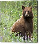 Canadian Bear Canvas Print