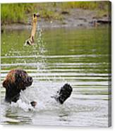 Brown Bear Playing With A Bone Canvas Print