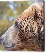 Brown Bear Portrait In Autumn Canvas Print