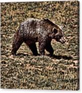 Brown Bears Canvas Print