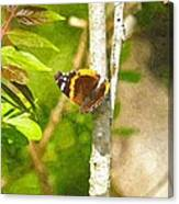Brown Butterfly 2 Canvas Print