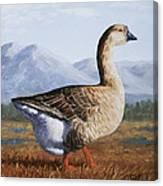 Brown Chinese Goose Canvas Print