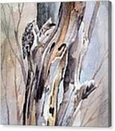Brown Creeper Canvas Print