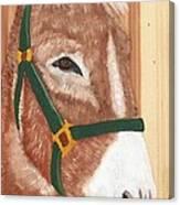 Brown Donkey On Cedar Canvas Print