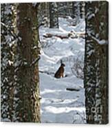 Brown Hare - Snow Wood Canvas Print