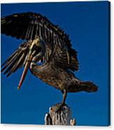 Brown King Pelican Canvas Print