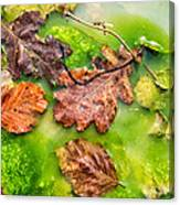 Brown Leaves In Green Pond Canvas Print