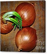 Brown Onions Canvas Print