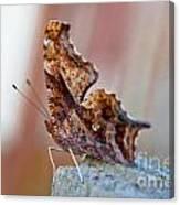 Brown Paper Moth Canvas Print