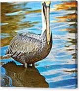 Brown Pelican Along The Bayou Canvas Print
