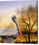 Brown Pelican At Rest Canvas Print