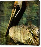 Brown Pelican Beauty Canvas Print