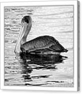 Brown Pelican - Black And White Canvas Print