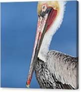 Brown Pelican Head Shot Canvas Print