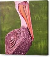 Brown Pelican I Canvas Print