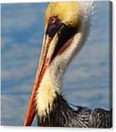 Brown Pelican In Morning Sun Canvas Print