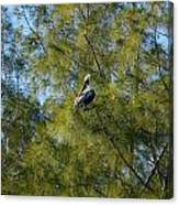 Brown Pelican In The Trees Canvas Print