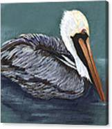 Brown Pelican On Water Canvas Print