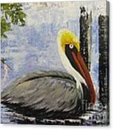 Brown Pelican Revisited Canvas Print