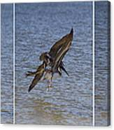 Brown Pelican - Triptych Canvas Print