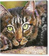 Brown Tabby Relaxing Canvas Print
