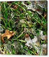 Brownleafsnowgrasscomp 2009 Canvas Print