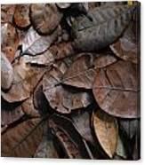 Browns Canvas Print