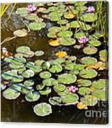 Bruges Lily Pond Canvas Print