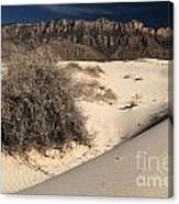 Brush In The Dunes Canvas Print