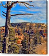 Bryce Canyon Cliff Tree Canvas Print