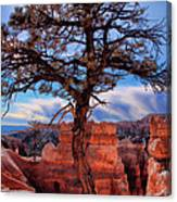 Bryce Canyon Middle Tree Canvas Print