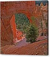 Bryce Canyon Natural Bridge And Tree Canvas Print