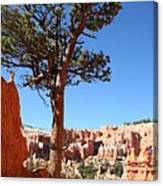 Bryce Canyon Pine Canvas Print