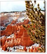 Bryce Canyon Pine Side Canvas Print