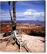 Bryce Canyon State Park Canvas Print