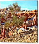 Bryce Canyon Tree Up Close Canvas Print