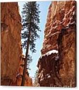 Bryce Canyon Wall Street Canvas Print