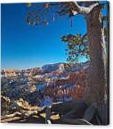 Bryce Pine Canvas Print